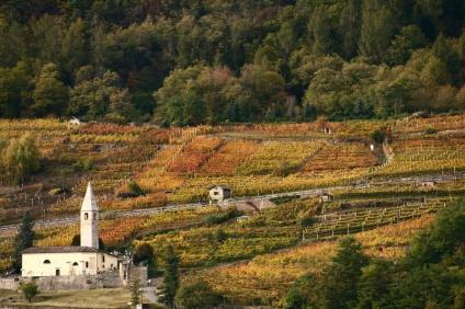 vineyard-1361616-1279x852